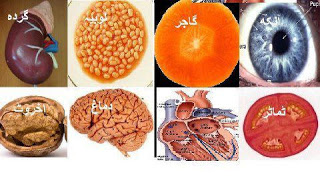 Allah's Pharmacy - Fruits & Their Treatment in The Light Of Islamic View